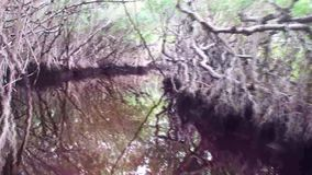 Florida, Everglades, in navigation on an airboat among the mangroves.  stock video