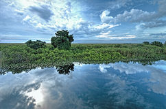 The Florida Everglades Royalty Free Stock Photos