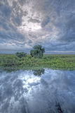 The Florida Everglades Stock Photography