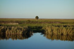 Florida Everglades stock images