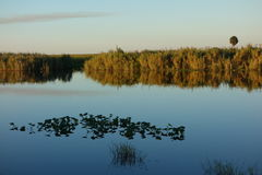 Florida Everglades. Reflections at a lake in the Florida Everglades at sunset Stock Photography