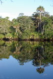 Florida Everglades shoreline. Thick jungle shoreline along a waterway in the Florida Everglades stock photography
