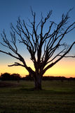 Florida Everglades Sunset. High dynamic range image of a beautiful sunset and bare tree silhouette in the Florida Everglades stock image