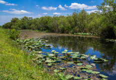 Florida Everglades. View at Shark Valley showing Canal and Lily Pads Royalty Free Stock Image