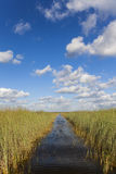 Florida Everglades Stock Image