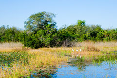 Florida Everglades Royalty Free Stock Images