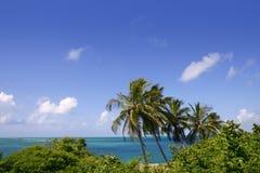 Florida fecha o mar tropical de turquesa das palmeiras Imagem de Stock
