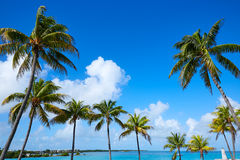 Florida fecha palmeiras no dia ensolarado Florida E.U. Fotos de Stock
