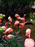 Florida Flamingos stock photography