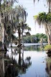 Florida flodarm royaltyfri fotografi