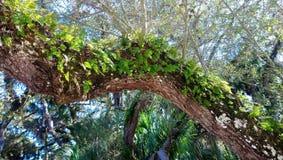 Florida foliage royalty free stock photo