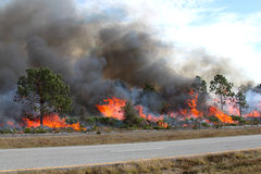 Florida Forest Ablaze Stock Photography