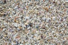 Florida Fort Myers beach sea shells sand US Royalty Free Stock Photos