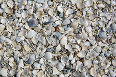 Florida Fort Myers beach sea shells sand US Stock Photo