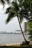 florida fortu Myers drzewko palmowe Obrazy Royalty Free