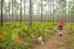 Florida fotvandrare royaltyfria bilder