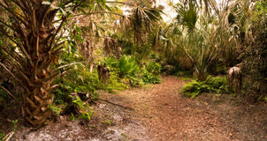 Florida Hardwood Hammock at Dusk Royalty Free Stock Photo