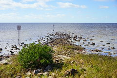 Florida hernando beach: bird on rock Royalty Free Stock Image