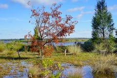 Florida hernando beach: pond Royalty Free Stock Photography