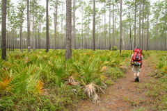 Florida hiker. A man hiking on a trail in Florida Royalty Free Stock Images