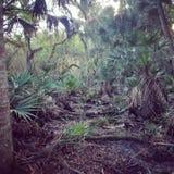 Florida-Holz Lizenzfreie Stockfotos