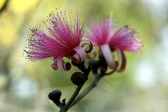 Florida i vårfärgträd Royaltyfria Bilder