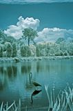 Florida Infrared Landscape Stock Photography