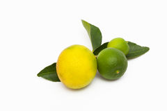 Florida Key Limes Stock Images