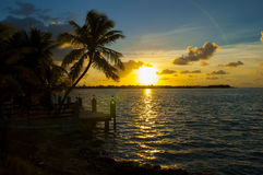 Florida Keys. Interesting long palm tree growing towards the sun out over the ocean from the land. The sun is going down as a yellow ball in the background Royalty Free Stock Photo