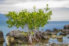 Florida Keys Island Stock Photography