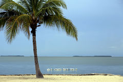 Florida Keys Palm and Bay 6. Florida Keys scenic Palm and Bay stock photo