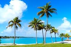 Florida Keys Palm trees in sunny day Florida US Royalty Free Stock Image