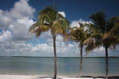 Florida Keys Palms and Bay 7. Florida Keys scenic Palm sand Bay Stock Image