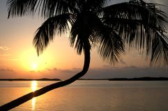 florida keys solnedgång Royaltyfri Bild