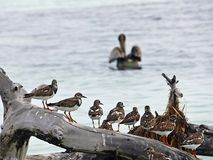 Florida keys. State Park of Bahia honda, birds perched on a log, stock photography