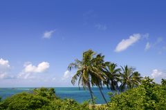 Florida Keys tropical palm trees turquoise sea Stock Image
