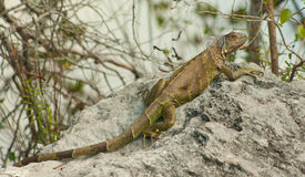 Florida Keys Wildlife Series 1 Royalty Free Stock Photo