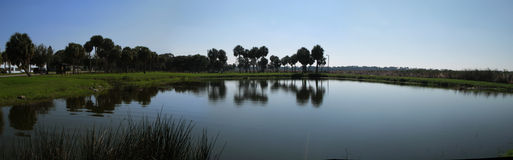 Florida lake panorama. This is a lake in St Petersburg, Florida with the reflections of the trees in the water stock images