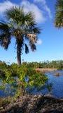 Florida lake and tree Stock Photos
