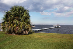 Florida landscape. Beautiful view of the exotic Florida nature St. Johns river Royalty Free Stock Images
