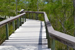 Everglades Boardwalk Stock Photos