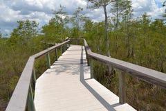 Everglades Boardwalk Royalty Free Stock Photography