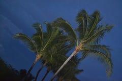 Marathon Palms Stock Photography