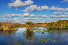 Florida Landscapes Royalty Free Stock Images