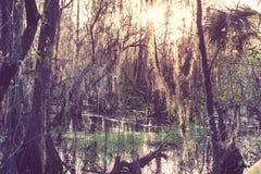 Florida landscapes Stock Image