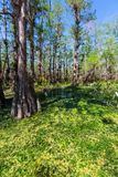 Florida landscapes Royalty Free Stock Photography