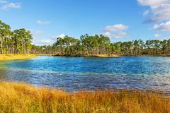 Florida landscapes Royalty Free Stock Photo