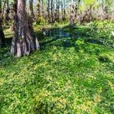 Florida landscapes Stock Photo