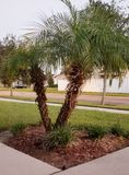 Florida Landscaping royalty free stock photography