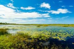 Florida-Landschaftsschutzgebiet stockfoto